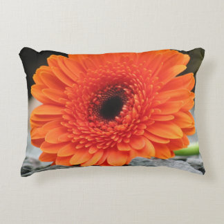 Orange Gerbera Daisy on Shale Background Accent Cushion