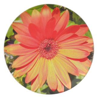 Orange Gerbera Daisy Plate