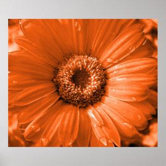 Orange Gerbera Daisy Poster