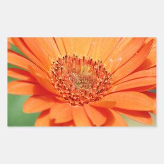 Orange Gerbera Daisy Rectangular Sticker