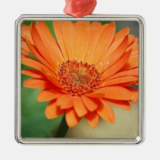 Orange Gerbera Daisy Silver-Colored Square Decoration