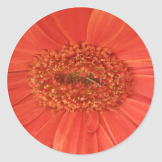 Orange Gerbera Daisy Sticker