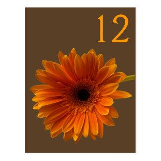 Orange Gerbera Daisy Table Number Card Post Card