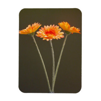 Orange Gerbera Flowers Rectangular Photo Magnet