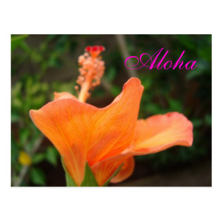 Orange Hibiscus postcard