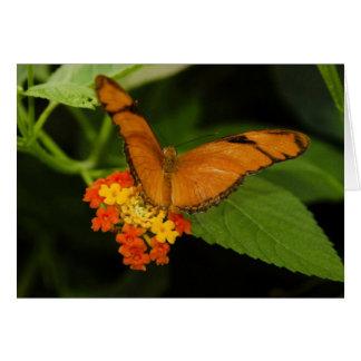 orange julia butterfly cards