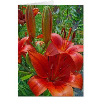 Orange Lily Blossoms Card