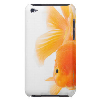 Orange lionhead goldfish (Carassius auratus) iPod Case-Mate Cases