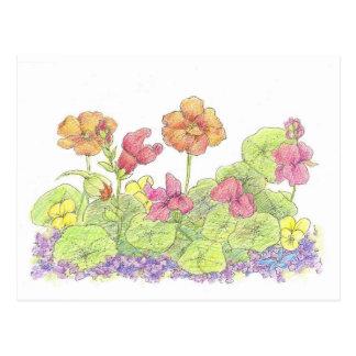 Orange Nasturtium Postcard Cottage Flower Garden