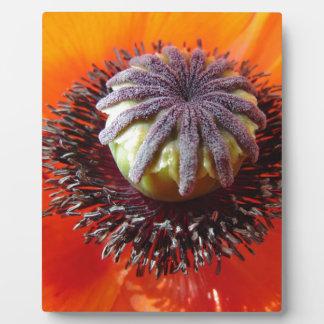 Orange Poppy Center Display Plaques