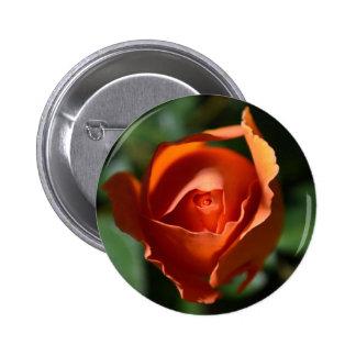 Orange Rose Blossom Button