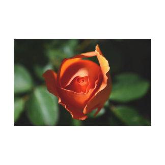 Orange Rose Blossom Canvas Print
