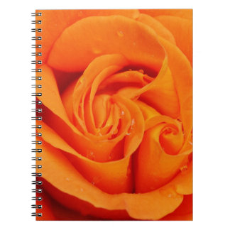 Orange Rose Blossom Note Book
