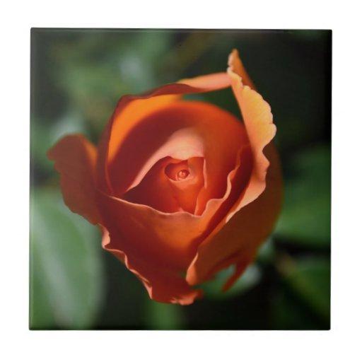 Orange Rose Blossom Tile