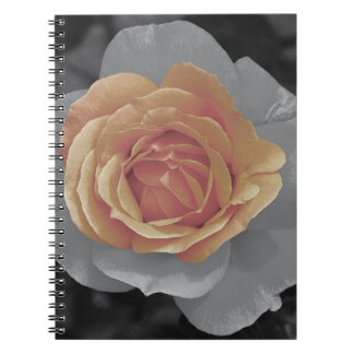 Orange rose blossoms print spiral notebooks