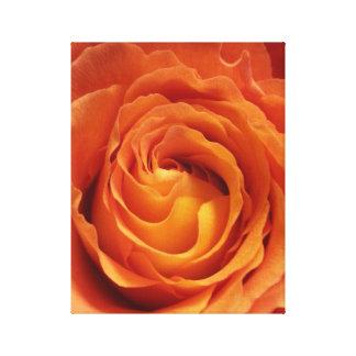Orange Rose Stretched Canvas Prints