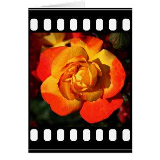 Orange Rose Note Card (envelopes included)