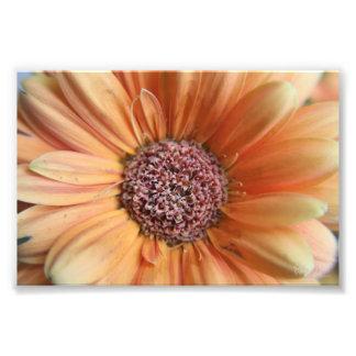 Orange Sherbet Daisy Art Photo