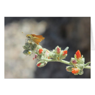 Orange Skipperling Butterfly Greeting Cards