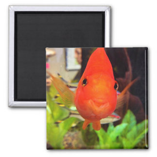 Orange Smiling Fish Square Magnet