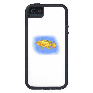 Orange Striped Fish iPhone 5/5S Cases