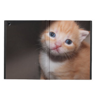 ORANGE TABBY KITTEN IPAD AIR CASE