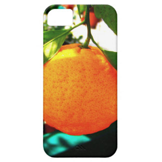 Orange Tree Closeup Cellphone Case