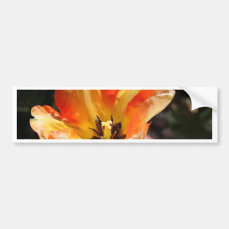 Orange tulip bumper sticker