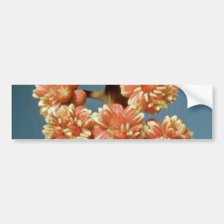 Orange Umbrella plant (Brassaia actinophylla) flow Bumper Sticker