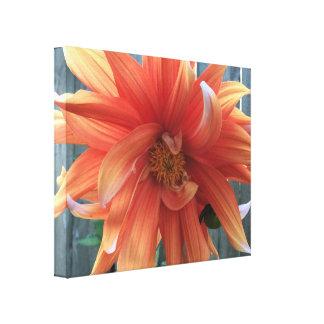 Orange-white blossom canvas print