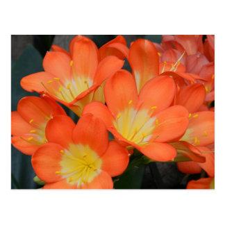 Orange Yellow Flower Postcards