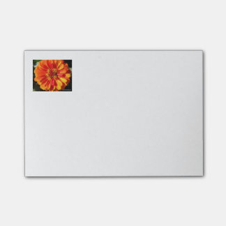Orange Zinnia Post It Notes