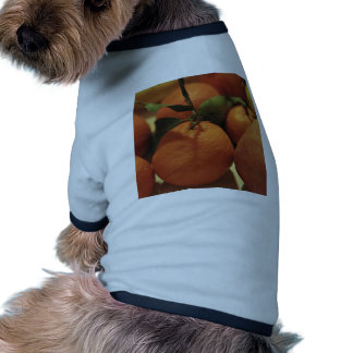 Oranges apples fruit on a table doggie shirt