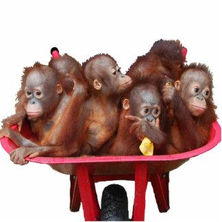 Orangutan Babies:More Fun Than a Barrel of Monkeys Standing Photo Sculpture