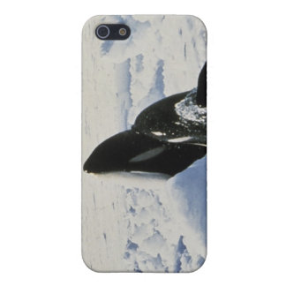 orca case for iPhone 5/5S