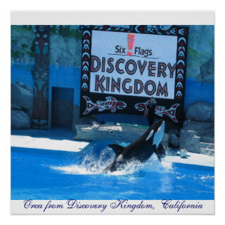 Orca from Discovery Kingdom,  California Poster