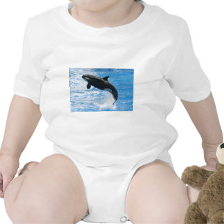 Orca Killer Whale Baby Creeper