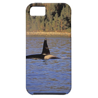 Orca or Killer whale. iPhone 5 Case
