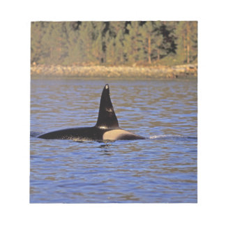 Orca or Killer whale. Notepad