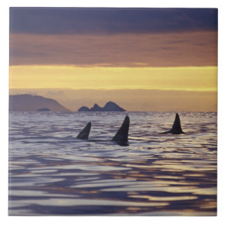 Orca or Killer Whales Large Square Tile