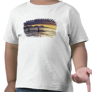 Orca or Killer whales T Shirt