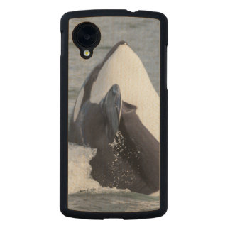 Orca whale breaching carved® maple nexus 5 case