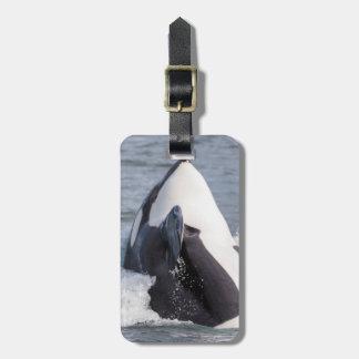 Orca whale breaching travel bag tag