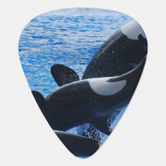 Orca Whale Guitar Pick