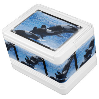 Orca Whale Igloo Drink Cooler