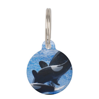 Orca Whale Pet ID Tag
