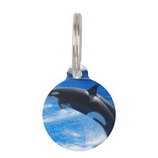 Orca Whale Pet ID Tag