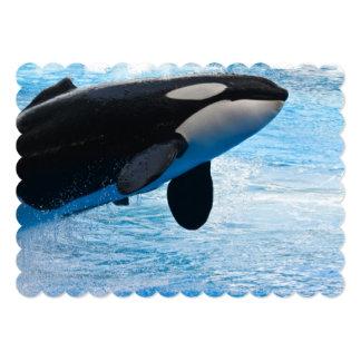 Orca Whales Custom Invite