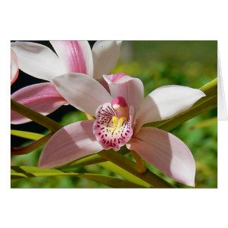 Orchid in a garden in Melbourne, Australia Card