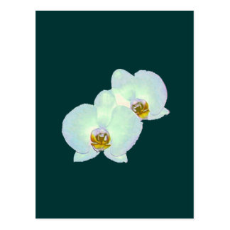 Orchid The MUSEUM Zazzle Gifts Zurich 2000 Postcards